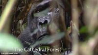 cathedral-forest-02