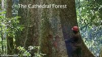 cathedral-forest-03